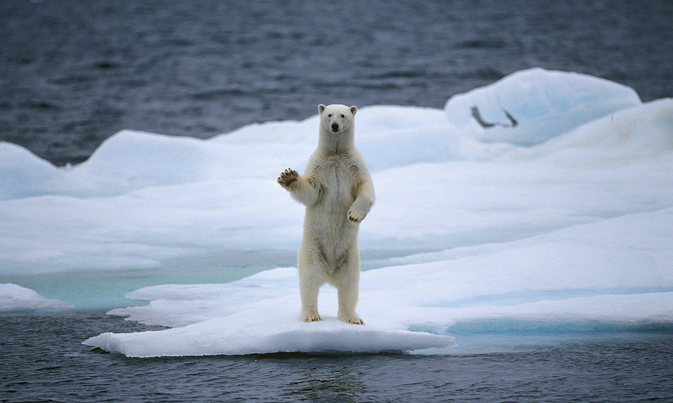 Το λιώσιμο των πάγων: ένα ανησυχητικό φαινόμενο » Power Politics